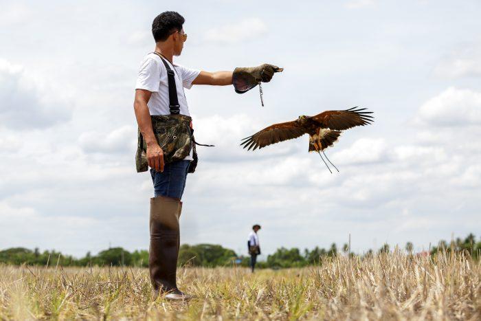 「放鷹術」を使った害鳥駆除