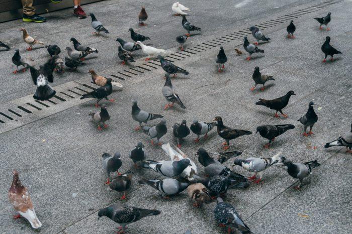 害鳥被害とその現状について